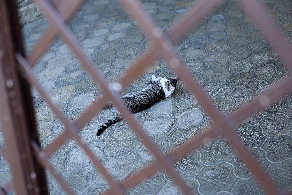 Анапа. котик  на жаре